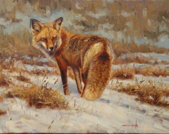 One Last Look-Red Fox (original oil painting)