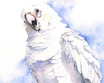 Corella print of watercolour painting A3 size largest print -C4515 wall art print - bird art print