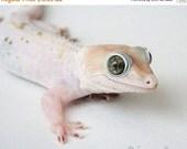 65% OFF Lizard Photography - Exotic Tokay Gecko Reptile Photograph - 8x10 Fine Art Photo Print