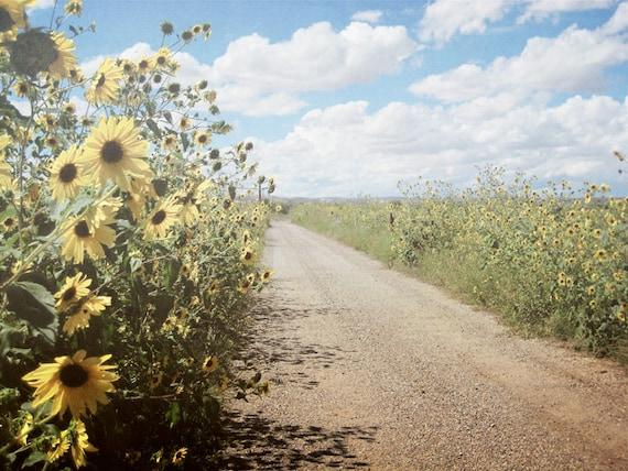 Sunflowers Road Photography Print 11x14 Fine Art New Mexico Field Clouds Southwest Rustic Autumn Landscape Photography Print.