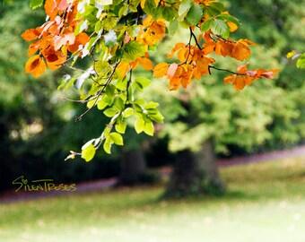 Autumn Tree Photography Wall Decor Fall leaves Photo Nature Landscape Autumn Colors Tree Art Nature Photography Colorful Fall Decor - P029