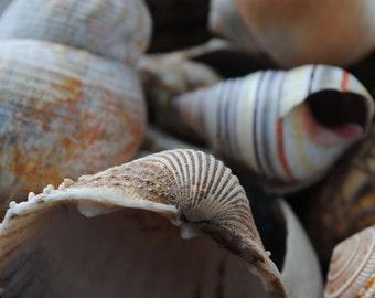 Sea Shells, Fine Art Photography Print, Beach Photography, Sea Shells Home Decor Photo, Natural Shells, Pastel Home Decor, Wall Art