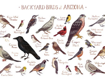 Arizona Backyard Birds Field Guide Art Print / Watercolor Painting / Wall Art / Nature Print / Bird Poster