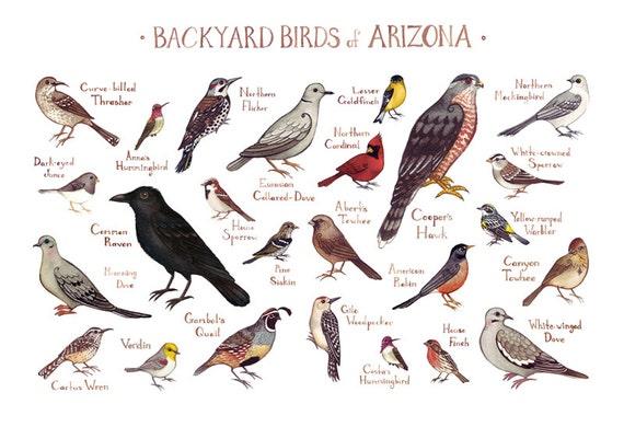 Arizona Backyard Birds Field Guide Art Print / Watercolor