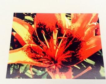 Orange Asiatic Lily Photo Postcard