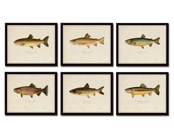 Vintage Trout Print Set No. 2, Natural History Art, Giclee, Art Print, Print Set, Posters, Woodland Art, Fish Print, Trout, Fly Fishing Art