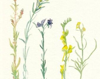 watercolor wildflowers, 8x10, original painting, green, yellow purple, summer, botanical art, home decor, spring