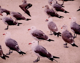 Modern Beach Photography, Seagull Art Print, Pink Coastal Artwork, 20x24 Picture, Retro California Photo, Seaside Photograph