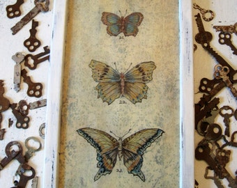"""Butterfly Art Painting Framed Original Art Butterflies Print Butterflies Specimen Print Repurposed Vintage Shabby White Frame, 7 1/4"""" x 13"""""""