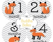 Fox Baby Month Stickers Monthly Baby Stickers Fox Baby Shower Gift Red Fox Month to Month Baby Stickers Milestone Photo Prop