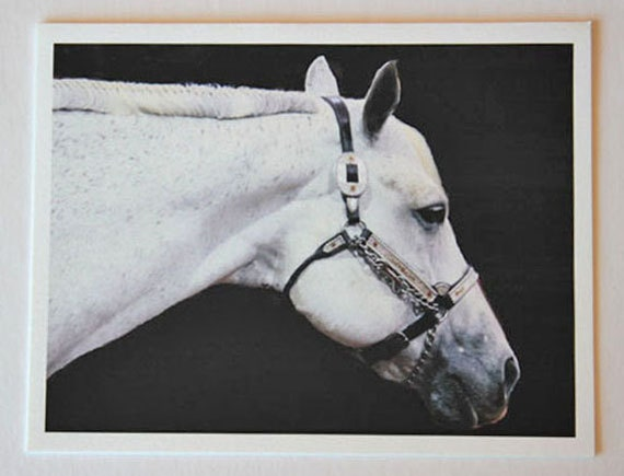 White Show Horse, note card, beautiful, blank greeting card, black and white, equestrian photos, fine art, single card, photo greeting card,
