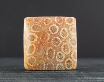 Beautiful fossil coral cabochon S6856