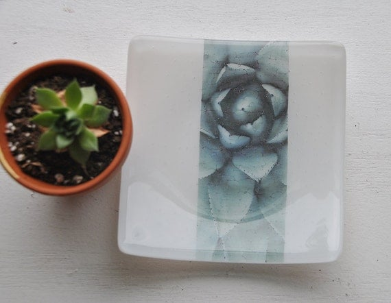 Succulent 5x5 Square Glass Fused Dish with White Glass