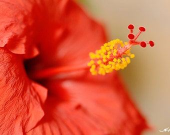 Red hibiscus PRINT and CANVAS gallery wrap Flower wall decor Elegant home artwork Still Life Scarlet red Deep orange Yellow Chic bathroom