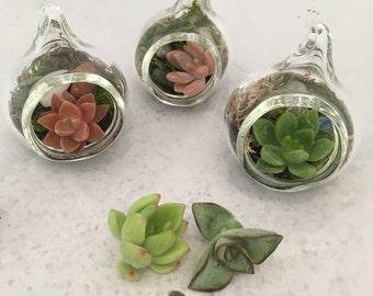 Set of 3 Hand Blown Glass Miniature Succulent Terrariums