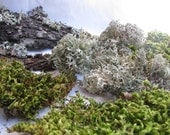 Moss, Lichen and Branches, natural forest product, dried,  Fairy
