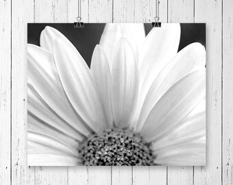 Daisy Print Black and White Flower Print Daisy Art Print Flower Art Home Decor Nature Photography Flower Photography Daisy Wall Art