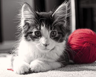Kitten Photo, Black and white and red, fine photography print, Yarn Addict