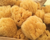 "5-6"" Silk Sea Sponges"