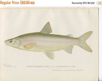 SALE ANTIQUE DENTON Lithograph - Original Bookplate - Circa 1902 - Fish - Artist Sherman F Denton - Angler - Fisherman - Fishing - White Fis