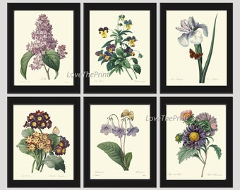 Botanical Print Set of 6 Art  Redoute Antique French Garden Lilac Aster Primula Iris Blue Plants Spring Summer Vintage Room Wall Decor