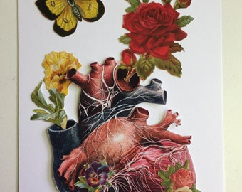 Anatomical Heart #3