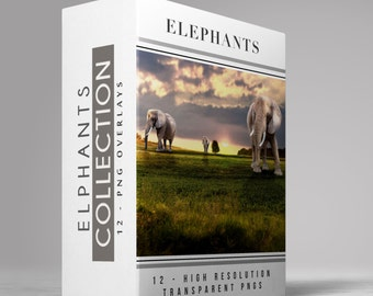 ELEPHANTS - 11 -  Transparent PNG  ELEPHANT Images