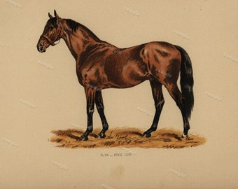 1890 0riginal Antique Natural History Chromolithograph of a horse Gladiateur Animal Print-  Nature print  Very Rare