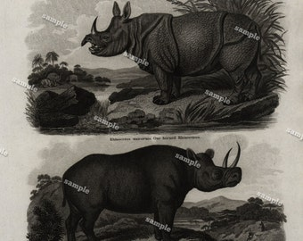Quadrupeds Authentic  Natural History Engraving 1801 - Animals - Rhinoceros  -Large print-black and white-