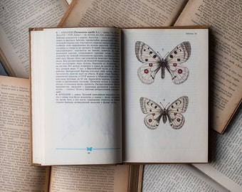 Vintage Illustrated Entomology Book - Moth Butterfly Guide Book, Vintage Butterfly Illustrations, Insect Illustrations