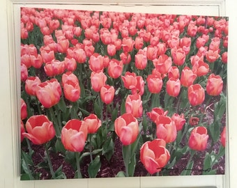 Tulips Artist Signed Photograph