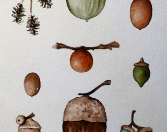 Acorns and Seeds Watercolor