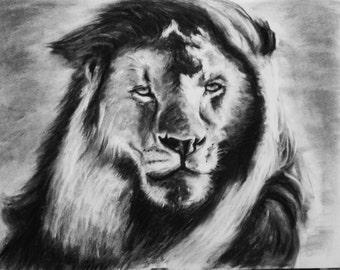 Lion. Original charcoal drawing. 18 x 24