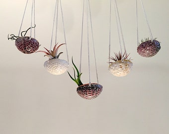 air plant hanging planter / air plant holder / textured