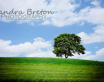 Tree - Fine Art Photography Print 11x14