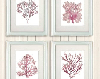 Pink Coral prints Set 4 Corals in Pink 1 - coral wall art sea coral print sea coral décor light pink room decor girls bedroom decor wall art
