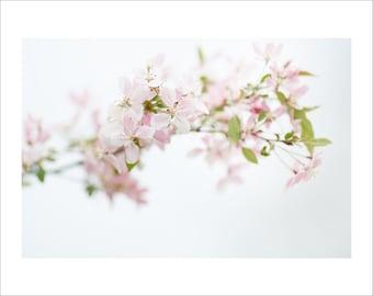 Apple Tree - Blossom - Color Photo Print - Art Nature Photography (AB01)