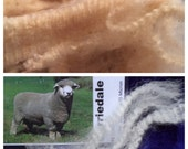 FALKLAND CORRIEDALE 50g  Fine micron sheep wool raw fleece. Ideal for spinning Lace! Unwas