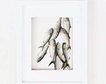 Matted 11x14 Watercolor Bunkerfish Print