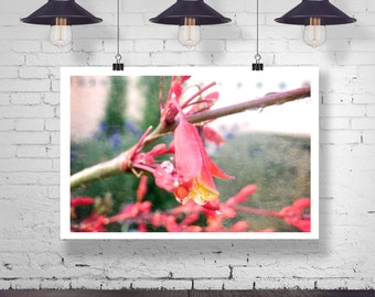 Photograph - Textured Pink Wild flower in the Rain with Water Rain Drop Dropplets Fine Art Photography Print Wall Art Home Decor