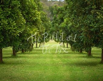 Macadamia Orchard Digital Backdrop Background Photography Photoshop Composite Stock