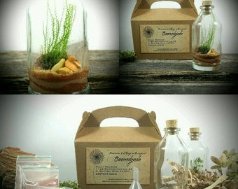 DIY Terrarium Kit, Corked Bottle moss terrarium with sand art