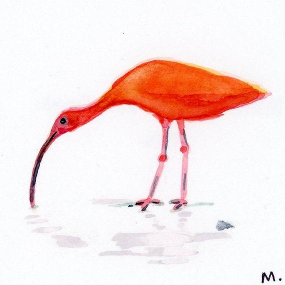 """Scarlet Ibis - Watercolor - 4"""" x 4 1/2"""""""