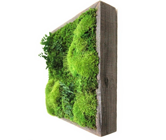 """Artisan Moss® 14""""x14"""" Plant Painting®- No Care Green Moss Wall Art. Real Preserved Plants.  Moss and Fern. Reclaimed Wood."""