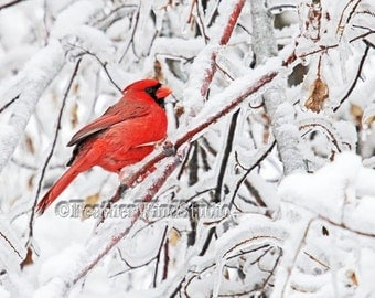 Nature Photography | Northern Cardinal in Snow | Red Winter Bird Icicle Art | White Original Photo | FeatherWindStudio | Home Design Print
