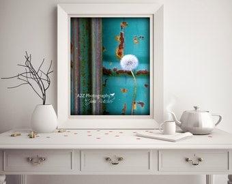 Gorgeous turquoise dandelion rustic farmhouse wall art photo print