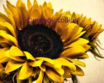 Fine Art Photography by Mandy Collins - 'Glorious Sunflowers 2' is an A4 fine art print of stunning golden yellow sunflowers