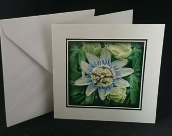 "Photography 5""x5"" Blank Greetings Card Flowers (C072016)"