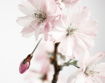 Ancient blossom No.3, photoart print/poster, 70x100cm (27,6x39,4inches)
