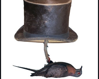 Beaver top hat, carrier pigeon